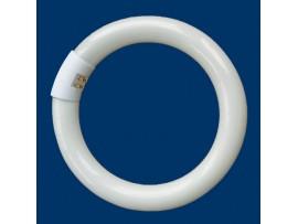 Лампа 22W L22W/840 кольцевая 1350lm G10q Osram